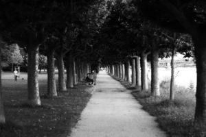 Allee entlang des Rheins